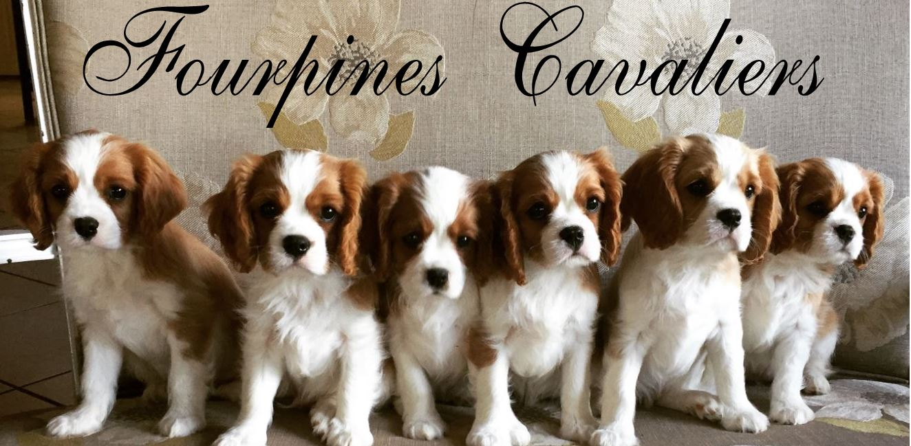 F A Q  – Fourpines Cavaliers